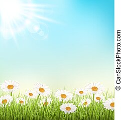 Green grass lawn with white chamomiles and sunlight on sky