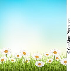 Green grass lawn with white chamomiles on sky