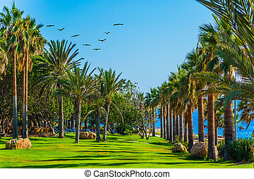 Green grass lawns on the shore
