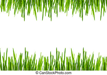 Green grass leaves on white background
