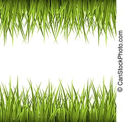 Green grass like frame isolated on white. Floral eco nature