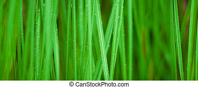 green grass macro background