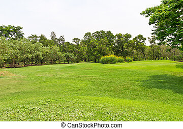 green grass meadow in the park