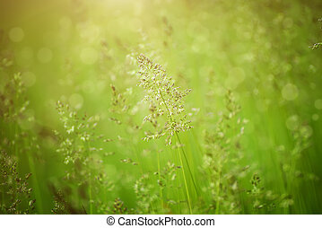Green grass meadow suitable for backgrounds or wallpapers, ...