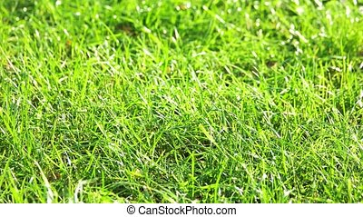 Green grass motion. Close up. Grass and wind blow...