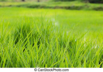 green grass nature background