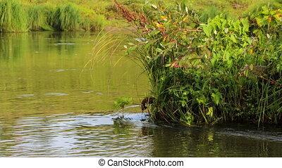 Green grass near the river