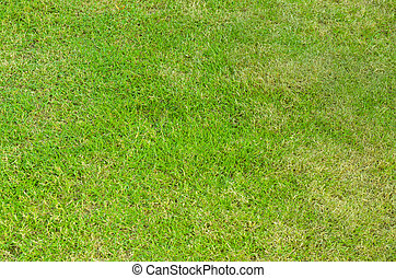 Green grass of golf field