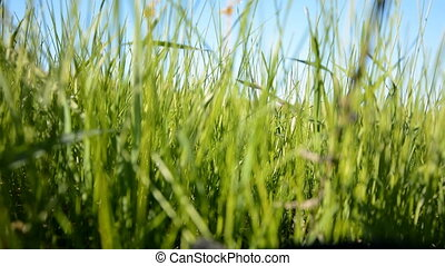 Green grass on a background of runn