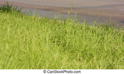 Green Grass on a Roadside - Green grass on a roadside. Soft ...