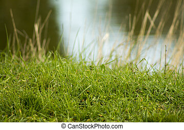 green grass on a water background