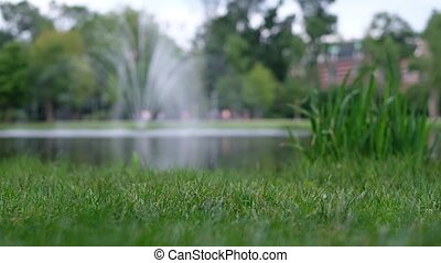 Green grass on background of blurred fountain