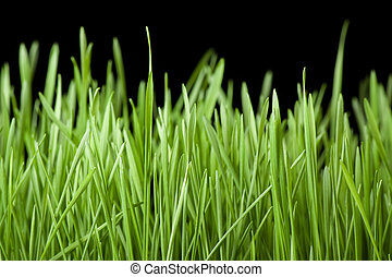 green grass on black background