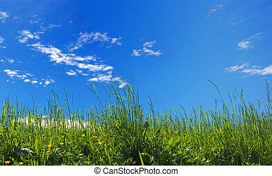 sky background - green grass on blue sky background