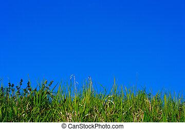 green grass on blue sky