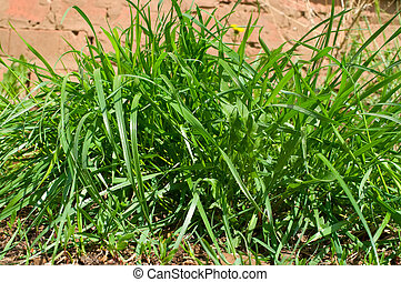 grass on brown sand