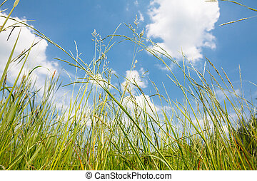 green grass on cloudy sky background