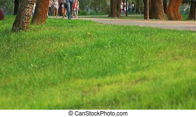 Green grass on crowded park.