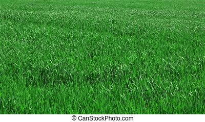 Green grass on field