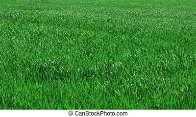 Green grass on field