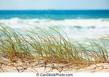 Green grass on sandy dune overlooking beach - Green grass on...