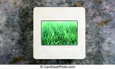 Green grass on slide film