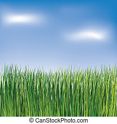 Green grass on the blue sky background