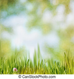 Green grass on the noon, abstract natural backgrounds