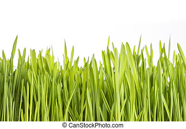Green grass on white background.