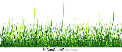Green grass on white background. Vector illustration. Isolated.