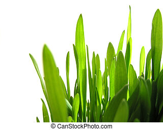 Green grass on white - Closeup on green grass isolated on...