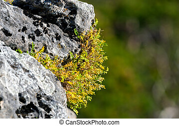 Green grass on wild stone in mountains