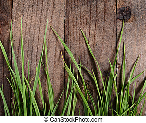 Green grass on wooden background