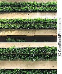 Green grass on wooden shelf