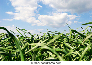 green grass over sky background
