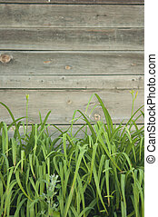 green grass over wood fence background