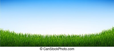 Green Grass Panorama With Blue Sky