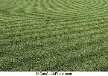Green grass pattern.
