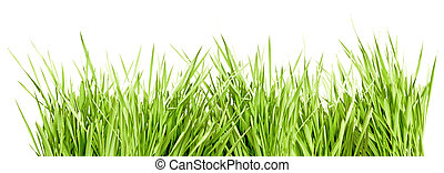 Green Grass - Fresh Green Grass Isolated on White Background