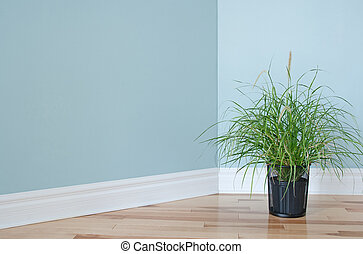 Green grass plant decorating a room