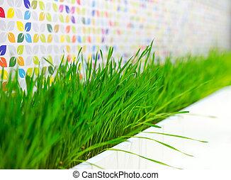 Green grass plant decorating