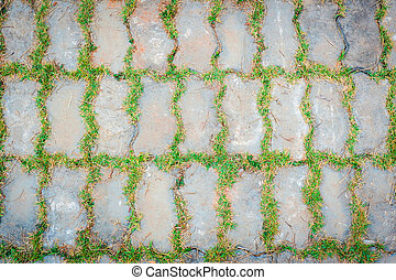 Green grass plant growing on cement brick ground