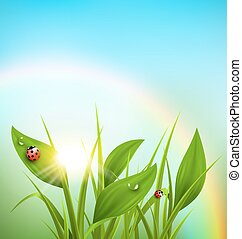 Green grass, plantain and ladybugs with sunrise and rainbow on blue sky. Floral nature spring