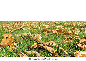 green grass plot with yellow leaves