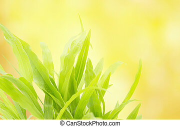Green grass refreshment in morning sun light