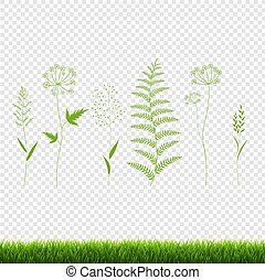 Green Grass Set Isolated Transparent Background