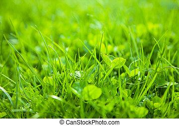 Green grass, shallow depth of field