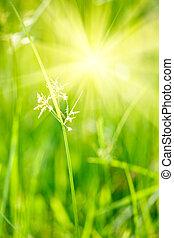 Green grass - shallow depth of field