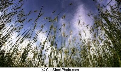 green grass slow motion
