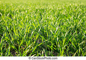 Green grass, spring ang summer background